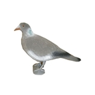 East Anglian Flocked Pigeon with Legs - Head Up