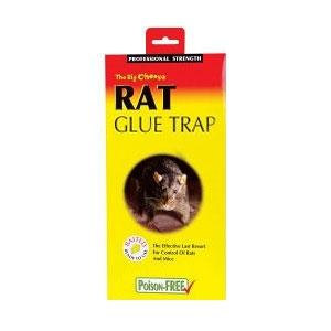 Image of Big Cheese Rat Glue Trap