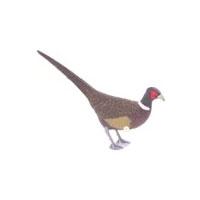 Sportplast Pheasant Decoy
